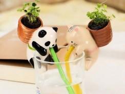 Chuppon Panda Basilic