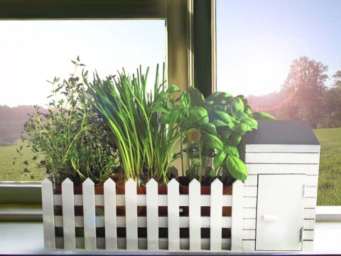 Desktop Herb Garden